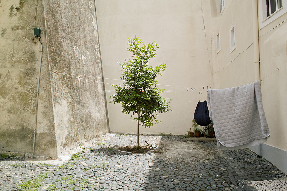 A Tree And A Rug