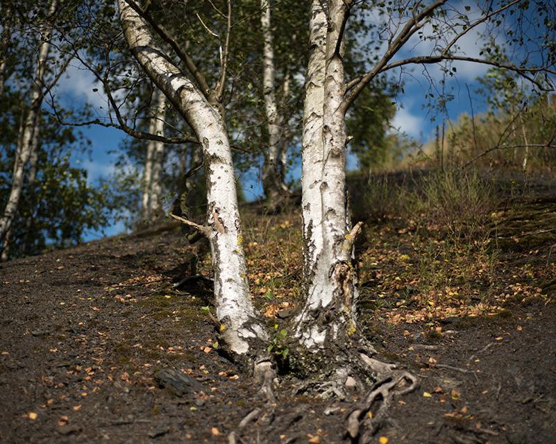 Siamese Tree, Balad 1/ Charleroi