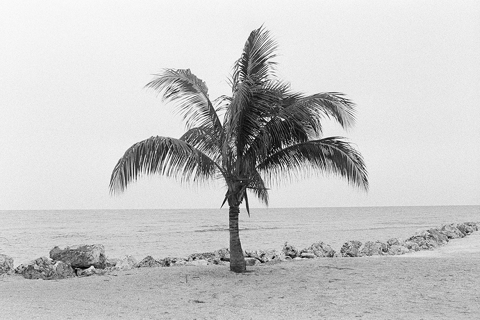 The Palm Tree